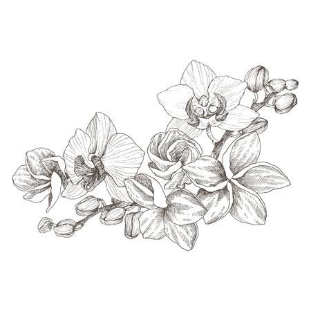 Realistico disegnato a mano. Vintage fiori di orchidea penna e inchiostro illustrazione isolato Vettoriali