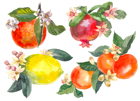 Set of hand drawn watercolor painting on white background. Aquarelle illustrations of citrus fruits with flowers