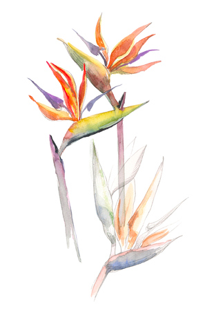 Strelitzia tropical plant. Collection with hand drawn flowers and leaves. Design for invitation, wedding or greeting cards. Stok Fotoğraf