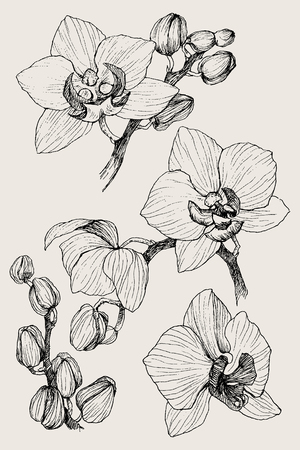 Set of hand drawn black outline orchid on a white background isolated. Highly detailed vector illustration. Beautiful exotic flower. Cymbidium