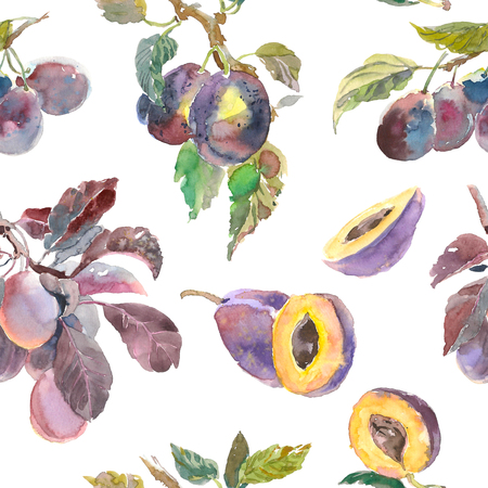 Seamless pattern of watercolor fruit plum branch isolated on white background. Hand drawn painting. for your design, cloth, package Standard-Bild