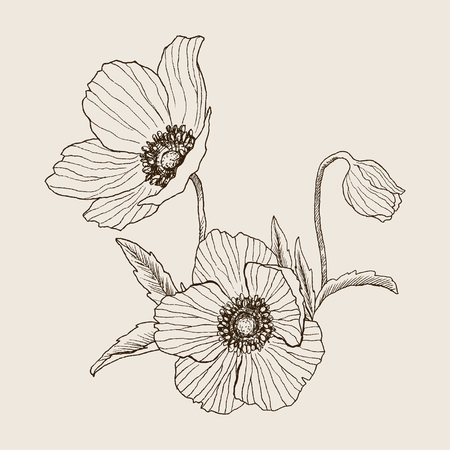 Anemone flower vector drawing bouquet. Isolated wild plant and leaves. Herbal engraved style illustration. Detailed botanical sketch. Flower concept. Botanical concept.