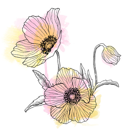 Anemone flower linear drawing bouquet. Wild plant with watercolor spots. Herbal engraved style illustration. Detailed botanical sketch. Flower concept. Botanical concept.