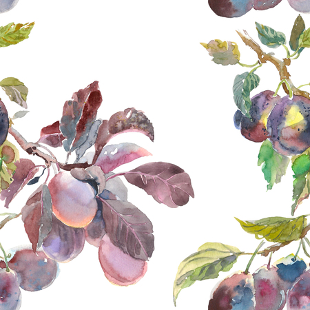 Seamless pattern of watercolor fruit plum branch isolated on white background. Hand drawn painting. for your design, cloth, package Banque d'images