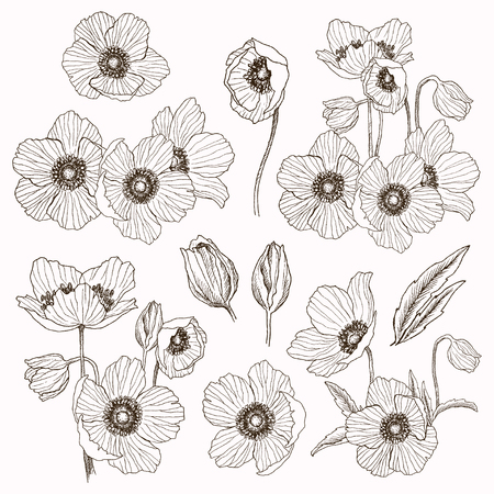 Anemone flower vector drawing set. Isolated wild plant and leaves elements. Herbal engraved style illustration. Detailed botanical sketch. Flower concept. Botanical concept.
