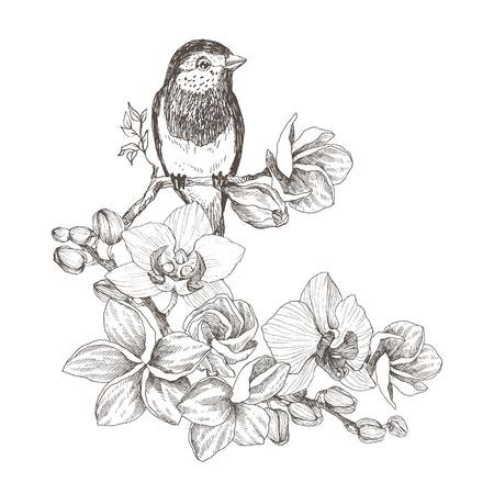 Mano de pájaro dibujada en estilo vintage con flores tropicales. Pájaro de primavera sentado en ramas de flor de orquídea. Arte grabado lineal. Concepto de pájaro. Concepto romántico. Diseño vectorial
