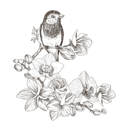 Bird hand drawn in vintage style with tropical flowers. Spring bird sitting on blossom branches of orchid. Linear engraved art. Bird concept. Romantic concept. Vector design