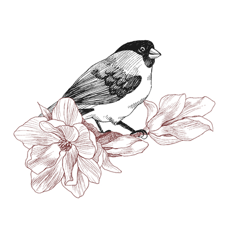 Bird hand drawn in vintage style with flower magnolia. Spring bird sitting on blossom branches. Linear engraved art. Bird concept. Romantic concept. Vector design