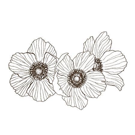 アネポネの花のベクトルの描画ブーケ。孤立した野生の植物や葉。ハーブの彫刻されたスタイルのイラスト。詳細な植物スケッチ。花のコンセプト。植物の概念。 写真素材 - 102889701