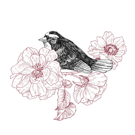 Bird hand drawn in vintage style with garden roses flowers. Spring bird sitting on blossom branches. Linear engraved art. Bird concept. Romantic concept. Vector design Illustration