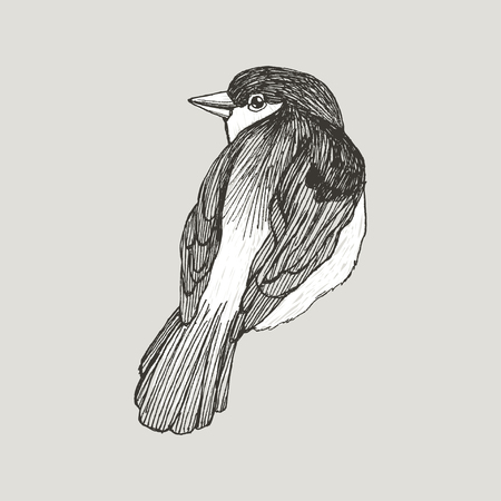 Vector graphic sparrow hand drawn bird on retro graphic style. Ink drawing, vintage style. Cute bird for your design. High detailed illustration