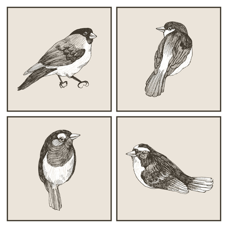 Vector graphic set of hand drawn birds on grey background. Ink drawing, graphic style. Cute birds for your design Ilustração