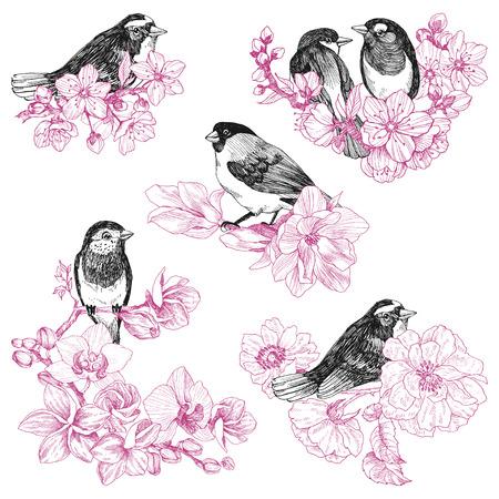 set di uccelli disegnati a mano in stile vintage con fiori. Uccello di primavera seduto sui rami del fiore.