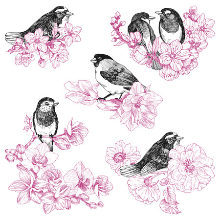 set of birds hand drawn in vintage style with flowers. Spring bird sitting on blossom branches.