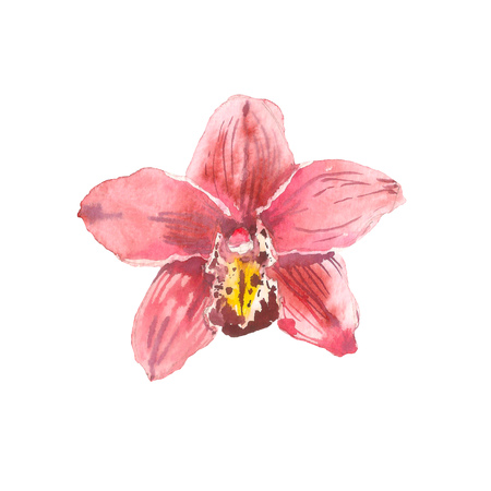Hand drawn watercolor illustration of tender pink orchid branch isolated on the white background. Tropical flowers of Hawaii, Thailand, Asia