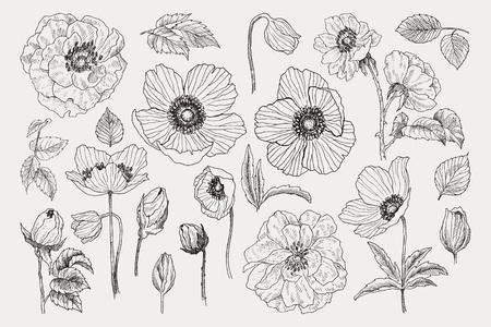 Gran conjunto de elementos vectoriales monocromáticos de flores vintage, decoración floral botánica, ilustración elegante lamentable, rosas silvestres y anémona, amapola, hojas y ramitas de flores silvestres florales naturales aisladas.