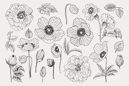 Big set of monochrome vintage flowers vector elements, Botanical flower decoration shabby chic illustration wild roses and anemone, poppy isolated natural floral wildflowers leaves and twigs.
