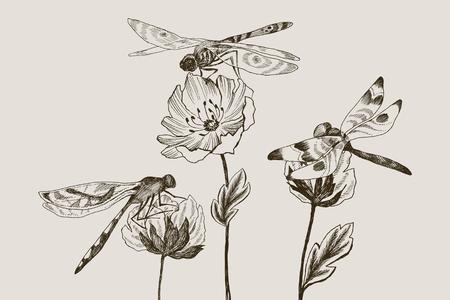 Conjunto de flores vectoriales con blanco y negro dibujado a mano de la libélula en estilo del bosquejo . ilustración del kawaii para su diseño Foto de archivo - 104038800