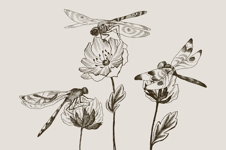 Set of vector flowers with black and white hand drawn dragonfly in sketch style. Botanical illustration for your design
