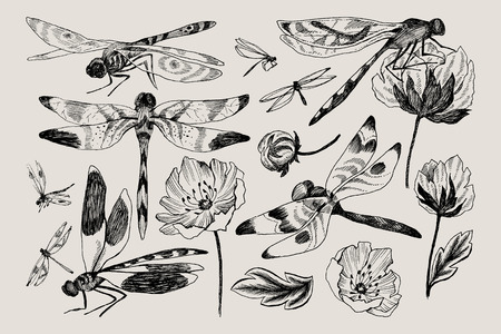 Big set of vector floral elements with black and white hand drawn herbs, wildflowers and dragonfly in sketch style. Imagens - 104038813