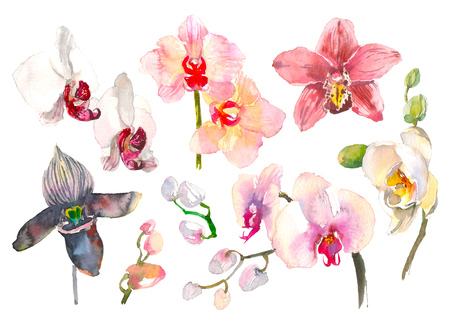 Set of hand drawn watercolor illustration of tropical orchid branch isolated on the white background. Tropical flowers of Hawaii, Thailand, Asia