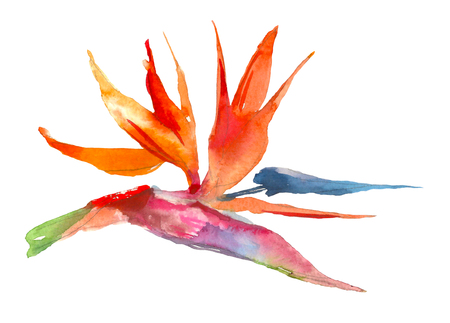 Strelitzia tropical plant. Watercolor hand drawn flowers and leaves. Design for invitation, wedding or greeting cards. Flower concept. Tropical concept Banco de Imagens