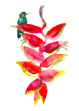 Calathea tropical plant. Watercolor hand drawn flower and colibri. Watercolor element for invitation, wedding or greeting cards. Flower concept. Tropical concept