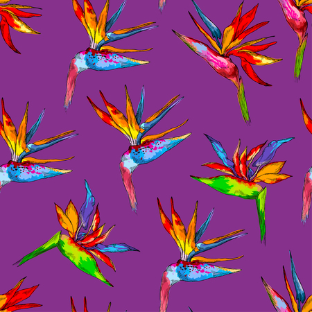 Seamless pattern of colorful strelitzia collection. Vector exotic flowers of a paradise bird isolated on violet background. Template for cloth, poster, packing design, web design. Tropical concept
