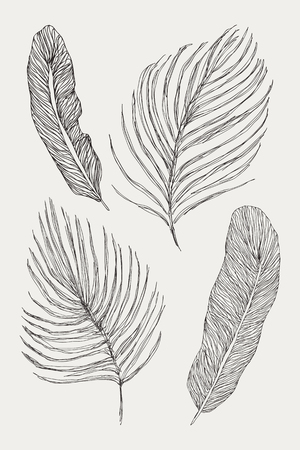 Collection set of palm leaves. Isolated on white background. Vector silhouettes