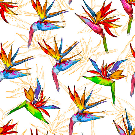 Vector illustration of strelitzia set. A flower of a bird of paradise on a white isolated background.