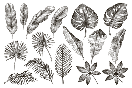 Set Leaf. Exotics. Vintage vector botanical illustration. Black and white