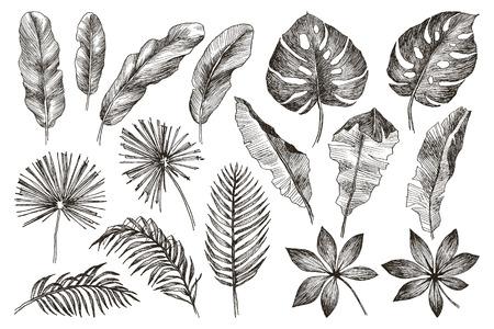 Imposta foglia. Esotici. Illustrazione botanica di vettore dell'annata. Bianco e nero