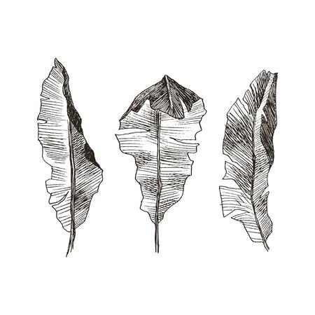 Set Leaf. Exotics. Vintage vector botanical illustration. Black and white Reklamní fotografie - 114950238