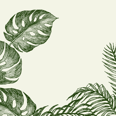 Set Leaf. Exotics. Vintage vector botanical illustration. Black and white Reklamní fotografie - 114950239