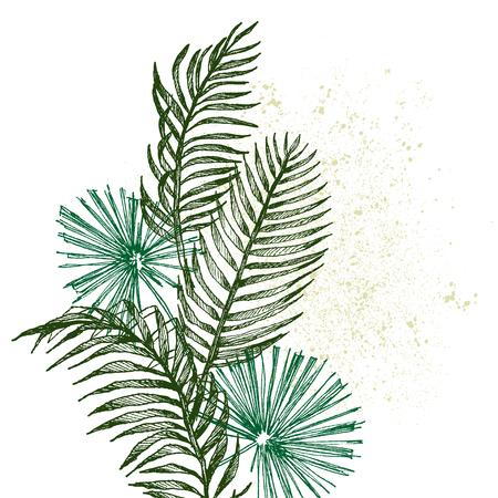 Set Leaf. Exotics. Vintage vector botanical illustration. Black and white Reklamní fotografie - 114950242