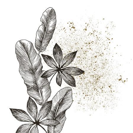 Set Leaf. Exotics. Vintage vector botanical illustration. Black and white Reklamní fotografie - 114950243