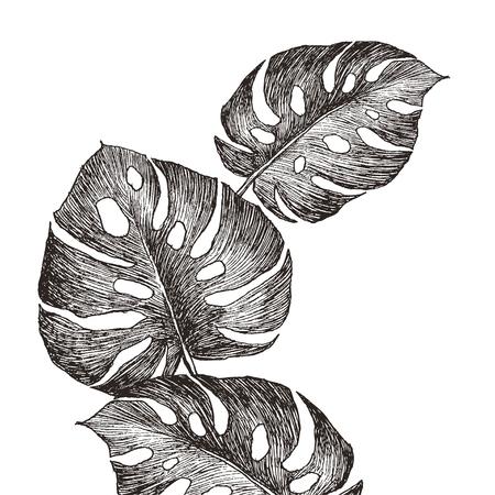 Set Leaf. Exotics. Vintage vector botanical illustration. Black and white Reklamní fotografie - 114912162