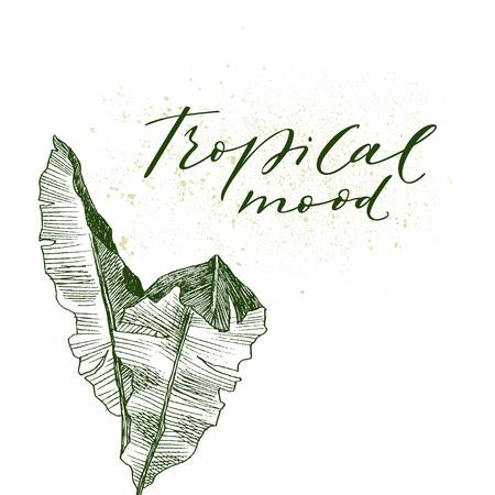 Set Leaf. Exotics. Vintage vector botanical illustration. Black and white Reklamní fotografie - 114839624