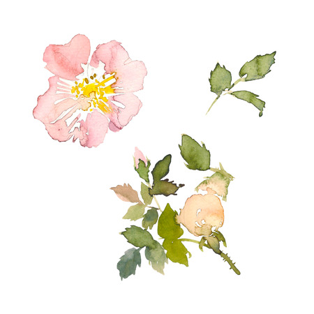 Watercolor element of pink roses and green leaves on the white background. Watercolor romantic garden flowers sketch. Card template with message Summer. Standard-Bild - 114552195