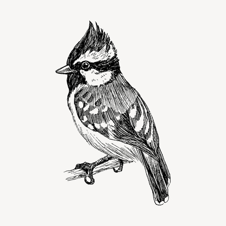 Bird vector illustration. Hand drawn cute bird drawing with black strokes and white spots Ilustração
