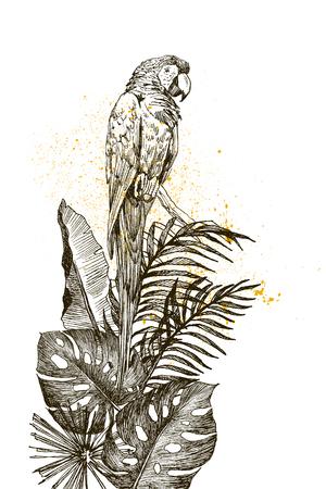 Parrot vintage engraved illustration. Hand drawn, sketch style  イラスト・ベクター素材