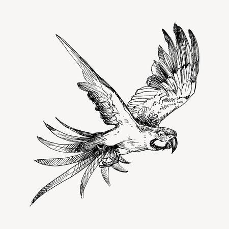 Illustration gravée vintage de perroquet. Dessiné à la main, style de croquis