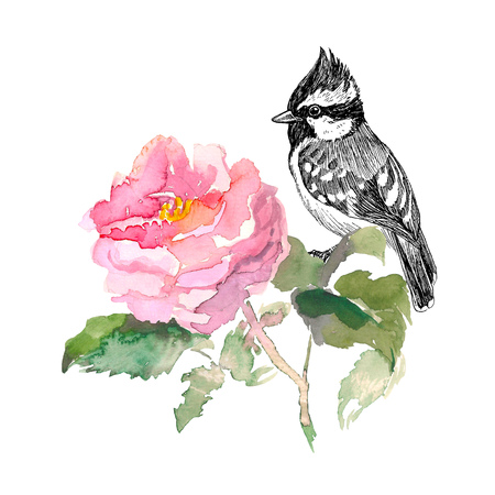 Watercolor pink rose and green leaves with hand drawn bird in sketch style. Isolated on the white background. Watercolor romantic garden flowers sketch. Card template with message Summer. Stock Photo