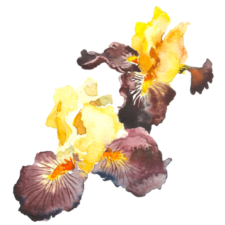 Burgundy watercolor iris flower. Hand drawn illustration in sketch style for greeting cards, invitations, and other printing projects. 스톡 콘텐츠