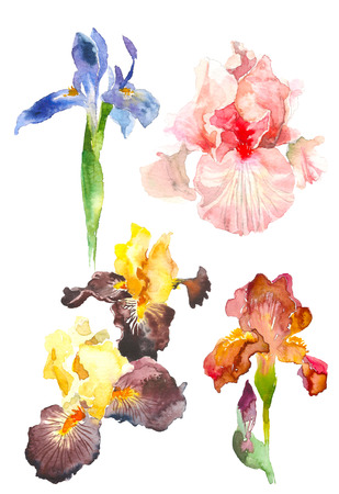 Set of watercolor iris flower. Hand drawn illustration in sketch style for greeting cards, invitations, and other printing projects. 스톡 콘텐츠