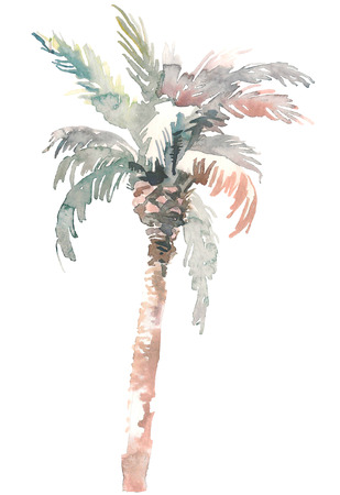 Watercolor palm, hand drawn illustration for your design. Isolated on white background 写真素材 - 114552278