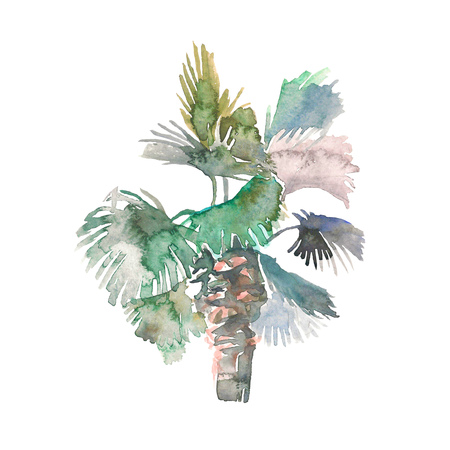 Watercolor palm, hand drawn illustration for your design. Isolated on white background 写真素材 - 114552282