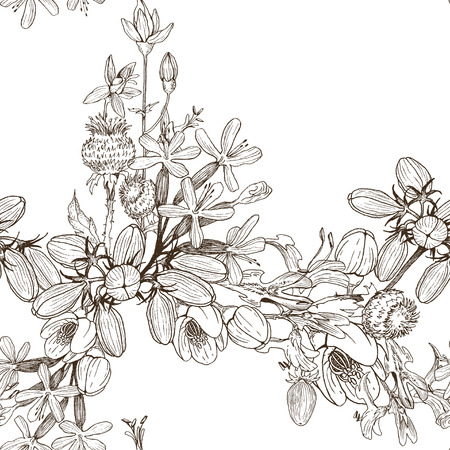 Medical herbs and plants Isolated on white background series. Vector illustration. Art sketch. Hand drawing object of nature. Vintage engraving style. Vektorgrafik