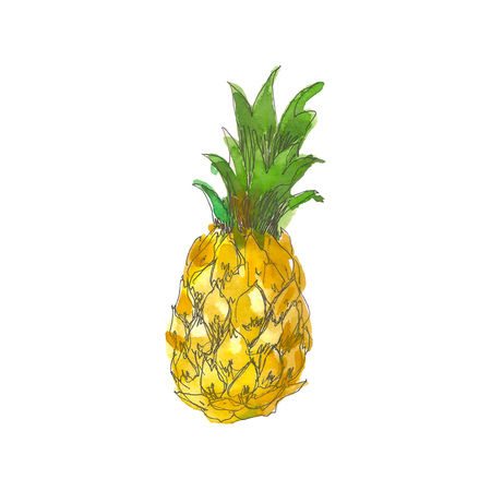 Watercolor pineapple fruit whole closeup isolated on white background. Hand drawing sketch style. Tropical fruit
