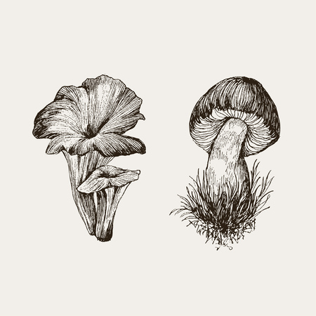 Set of forest nature objects. Botanical illustration in retro style